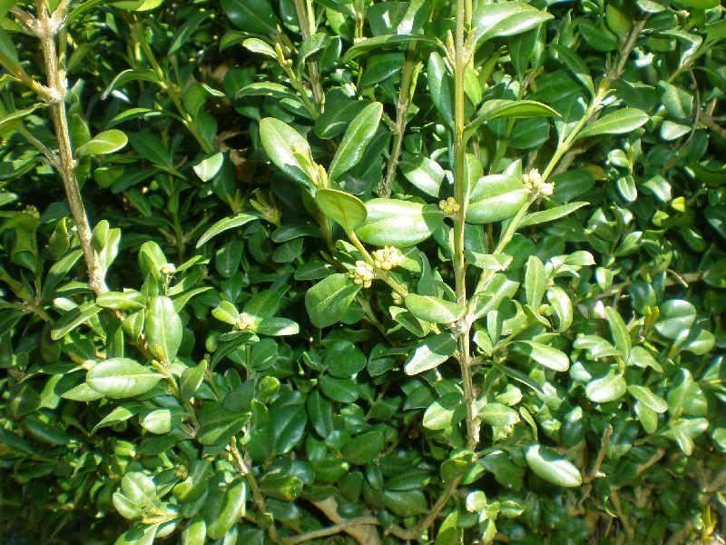 Foto pianta for Pianta ornamentale con foglie rosse e verdi